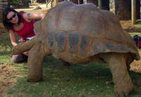 The author and a large Aldabra tortoise