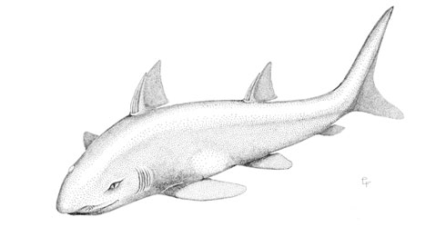 Wodnika striatula reconstruction