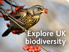Explore UK biodiversity