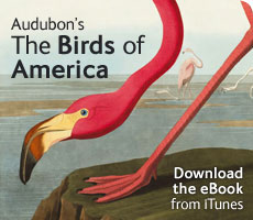 Audubon's Birds of America eBook for iTunes