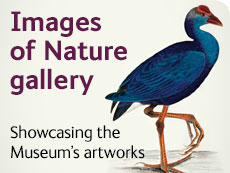 Images of Nature gallery