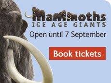 Mammoths exhibition graphic