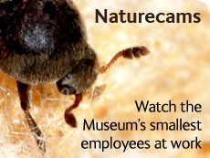 Naturecams: Watch the Museum's smallest employees at work
