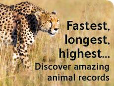 Fastest, longest, highest... Discover amazing animal records