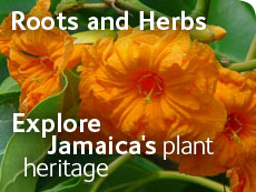 Roots and Herbs - Explore Jamaica's plant heritage