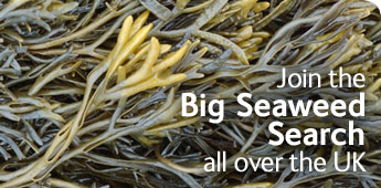Join the Big Seaweed Search all over the UK