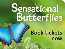 Sensational Butterflies 2013 - book tickets