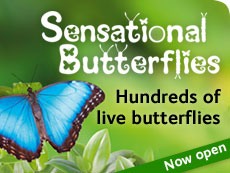 Sensational Butterflies exhibition 2014