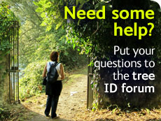 Need some help? Put your questions to the tree ID forum
