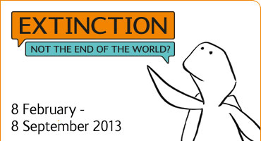 Extinction: Not the End of the World?