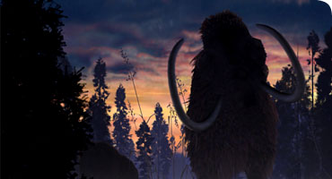 Why Did the Mammoth Go Extinct?