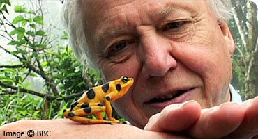 David Attenborough: Life on Camera