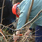 Coppicing in the Wildlife Garden