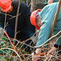 Coppicing in the Garden