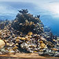 Coral Reefs: Secret Cities of the Sea - private view