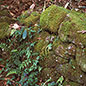 Mosses and Liverworts in the Wildlife Garden