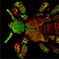 Under the Microscope: Objects in 3D