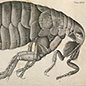 Robert Hooke and the Miracles of the Miniature