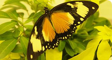 A House Full of Butterflies