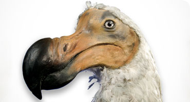 Researching the Dodo