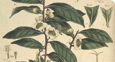 Behind the Scenes: The General Herbarium