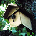 Build a Bird Box
