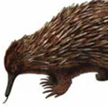 Egg-citing Echidnas