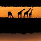 Members Evening: Wildlife Photographer of the Year. Meet the Winners
