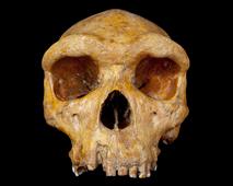 New book explores life through 100 fossils.