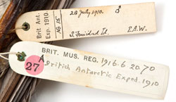 Join in a crowdsourcing project to digitise our bird collections by transcribing specimen labels. Could you uncover a new species?
