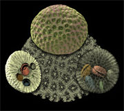 Coloured scan of corals wins global science image competition held at the Museum.