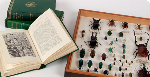 A selection of Wallace's books and insect specimens