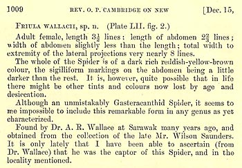 Naming a spider Friula wallacii (extract)