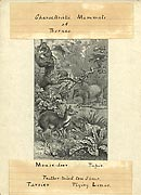 Proof illustration of the animals of Borneo
