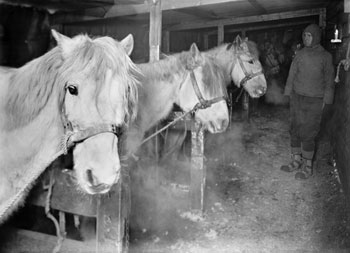 Captain Oates and ponies in the stable © H Ponting / SPRI