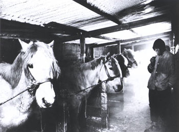 Captain Oates and the ponies in the stables at Cape Evans, 1911 © Canterbury Museum