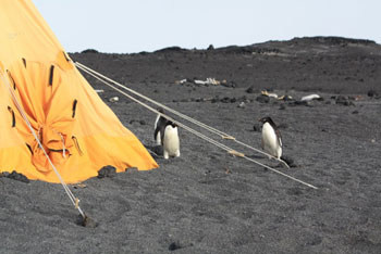 Penguins outside the tent © Antarctic Heritage Trust