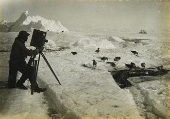 Herbert Ponting photographing a skua © Canterbury Museum