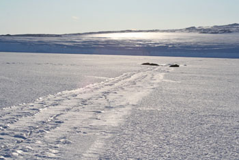 Weddell seals sunbathing along the Barne crack © Antarctic Heritage Trust