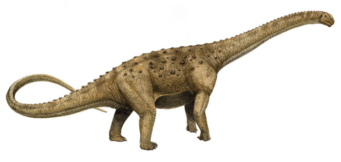 http://www.nhm.ac.uk/resources/nature-online/life/dinosaurs/dino-directory/colour/src/Janenschia.jpg