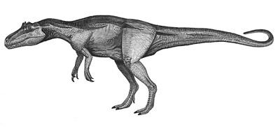 Хищный динозавр дельтадромей, останки котрого обнаружены в Марокко