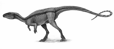 An artist's impression of Agilisaurus
