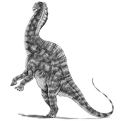 An artist's impression of Amargasaurus