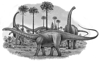 An artist's impression of Apatosaurus