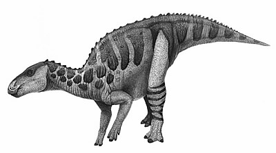An artist's impression of Bactrosaurus