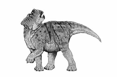 An artist's impression of Bagaceratops