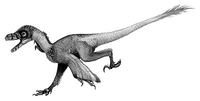 An artist's impression of Bambiraptor