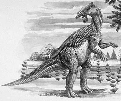 An artist's impression of Brachylophosaurus