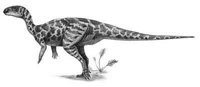 Bugenasaura.jpg