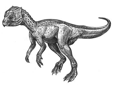 An artist's impression of Chaoyangsaurus